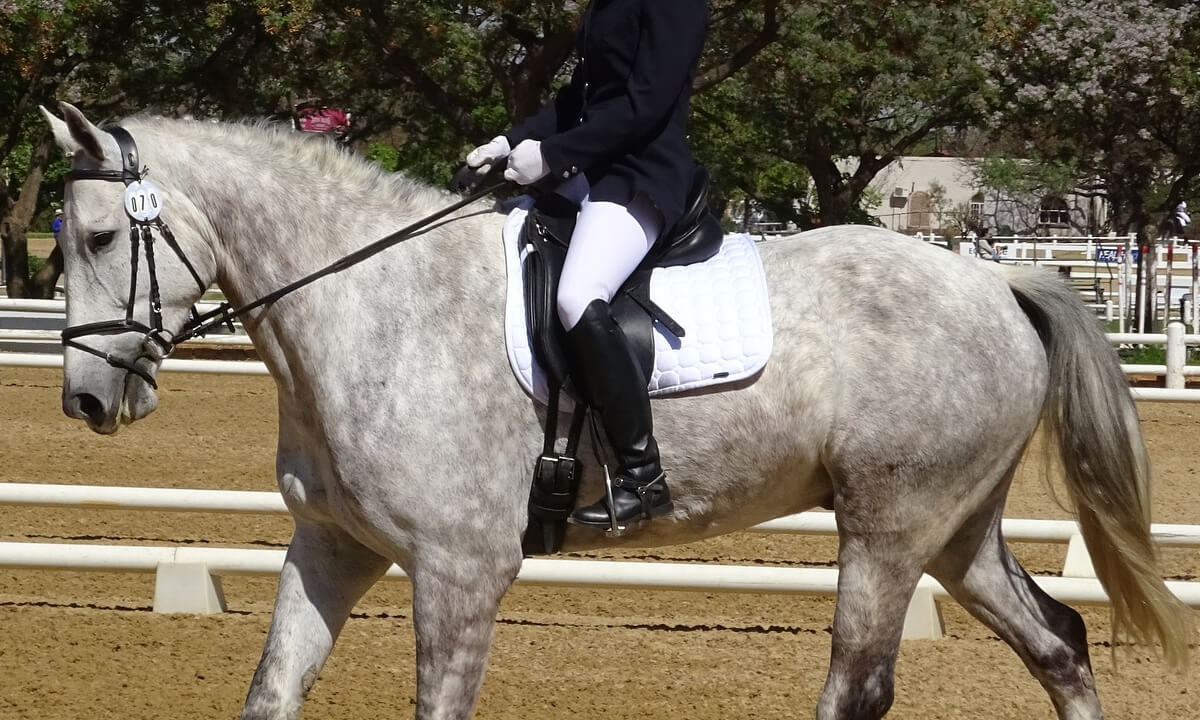 Dressage Saddlery Tack Rules