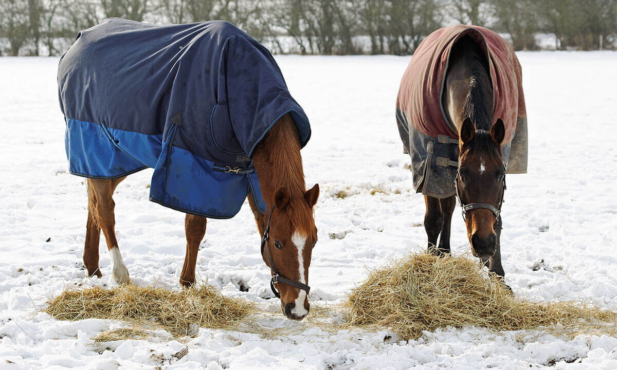 Horses eating hay in snow