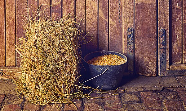 horse forage and concentrate feed ratios